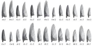 Krztałty zbadanych skrzydeł