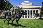 Cheetah od MIT biega na wolności