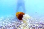 Roboctopus coraz bardziej przypomina ośmiornicę