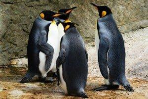 Jak zainstalować Linuxa na STM32?