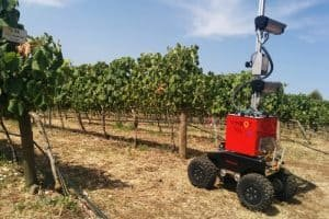 Wysoka jakość win dzięki robotom?