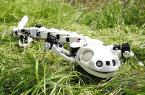 Robotyczna salamandra, czyli Pleurobot