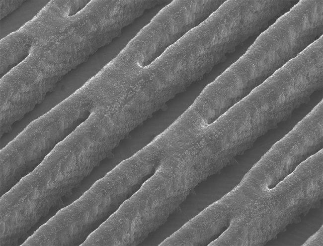 Sieć kanalików w powiększeniu (3 x 4 mm).