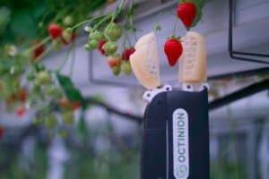 Ten robot zbiera truskawki niemal tak szybko jak człowiek!