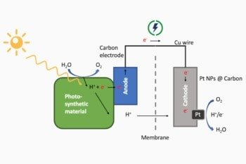 Przebieg reakcji w ogniwie biofotowoltaicznym