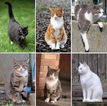 Przykładowe zdjęcia kotów