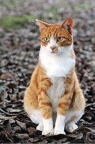 Przykładowe zdjęcie kota